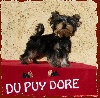 Elly du Puy Doré