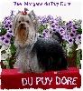 Fee morgane du Puy Doré